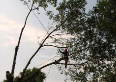 Arbre penché dangereux coupe darbres dangereux sur la Rive-Sud de Montréal - Arbreiz Élagage, Émondage, Élagage et coupe d'arbre sur la rive-sud de montréal et à montréal
