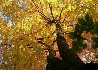Arbres Élagueur sur la Rive-Sud de Montréal - Arbreiz Élagage, Émondage, Élagage et coupe d'arbre sur la rive-sud de montréal et à montréal (1)