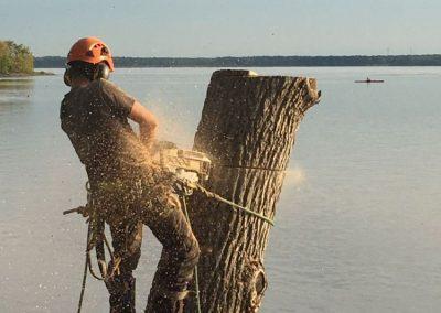 Coupe arbre dangereux menacant sur la Rive-Sud de Montréal - Arbreiz Élagage, Émondage, Élagage et coupe d'arbre sur la rive-sud de montréal et à montréal (1)