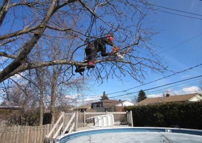 Coupe dun arbre dangereusement penché sur la Rive-Sud de Montréal - Arbreiz Élagage, Émondage, Élagage et coupe d'arbre sur la rive-sud de montréal et à montréal
