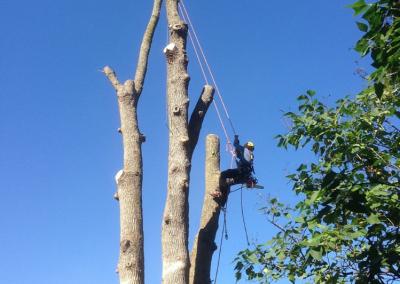 Coupe dun arbre essouchage sur la Rive-Sud de Montréal - Arbreiz Élagage, Émondage, Élagage et coupe d'arbre sur la rive-sud de montréal et à montréal (1)