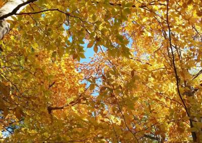 Dechiquetage de branches et elagage sur la Rive-Sud de Montréal - Arbreiz Élagage, Émondage, Élagage et coupe d'arbre sur la rive-sud de montréal et à montréal (1)