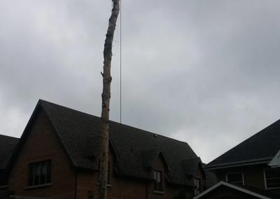 Dechiquetage de branches et haubanage sur la Rive-Sud de Montréal - Arbreiz Élagage, Émondage, Élagage et coupe d'arbre sur la rive-sud de montréal et à montréal (1)