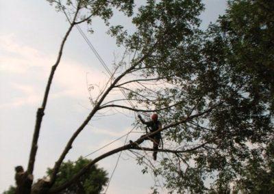 Service de coupe darbres Élagueur sur la Rive-Sud de Montréal - Arbreiz Élagage, Émondage, Élagage et coupe d'arbre sur la rive-sud de montréal et à montréal (1)