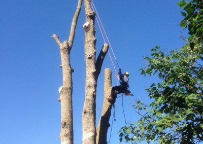 arbre emondage sur la Rive-Sud de Montréal - Arbreiz Élagage, Émondage, Élagage et coupe d'arbre sur la rive-sud de montréal et à montréal (1)