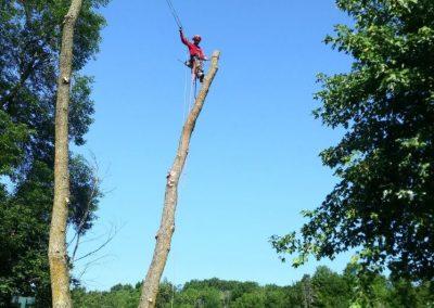 coupe darbre menacant sur la Rive-Sud de Montréal - Arbreiz Élagage, Émondage, Élagage et coupe d'arbre sur la rive-sud de montréal et à montréal (1)