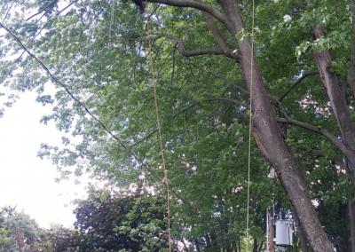 coupe dun arbre dangereux coupe darbres dangereux sur la Rive-Sud de Montréal - Arbreiz Élagage, Émondage, Élagage et coupe d'arbre sur la rive-sud de montréal et à montréal