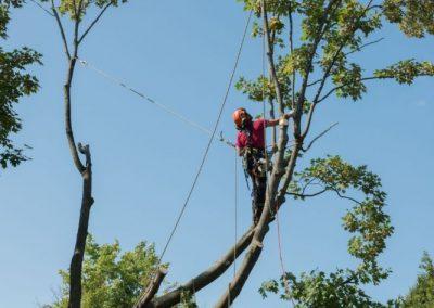 coupe dun arbre dangereux sur la Rive-Sud de Montréal - Arbreiz Élagage, Émondage, Élagage et coupe d'arbre sur la rive-sud de montréal et à montréal (1)