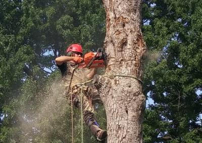 coupe dun arbre sur la Rive-Sud de Montréal - Arbreiz Élagage, Émondage, Élagage et coupe d'arbre sur la rive-sud de montréal et à montréal (1)