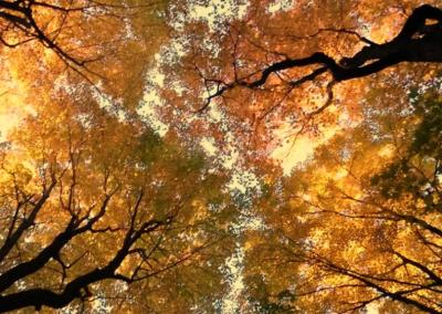 foret darbres sur la Rive-Sud de Montréal - Arbreiz Élagage, Émondage, Élagage et coupe d'arbre sur la rive-sud de montréal et à montréal