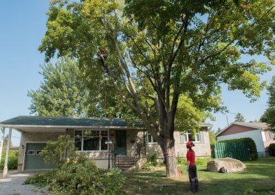 taille des branche dun arbre trop proche sur la Rive-Sud de Montréal - Arbreiz Élagage, Émondage, Élagage et coupe d'arbre sur la rive-sud de montréal et à montréal