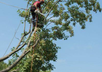 taille dun arbre dangereux service de taille darbre sur la Rive-Sud de Montréal - Arbreiz Élagage, Émondage, Élagage et coupe d'arbre sur la rive-sud de montréal et à montréal (1)