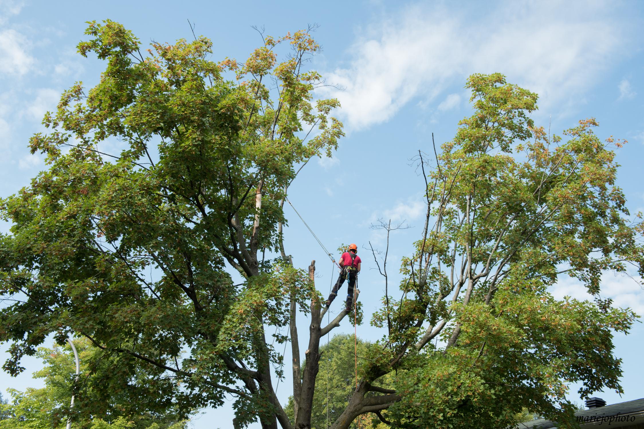 personne qui coupe les arbres à Montréal - Arbreiz Élagage sur la Rive-Sud de Montréal et à Montréal