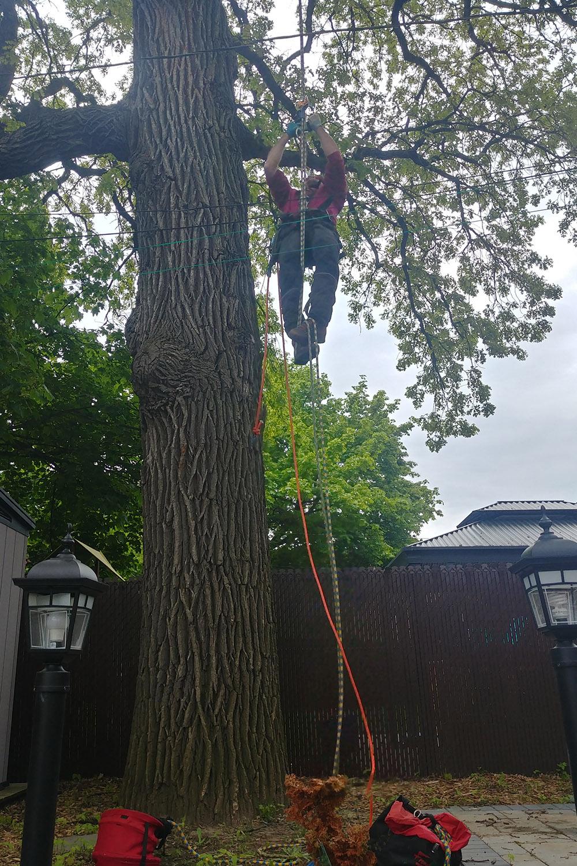 Taille de branches d'arbre Longueuil  - Arbreiz Élagage sur la Rive-Sud de Montréal et à Montréal