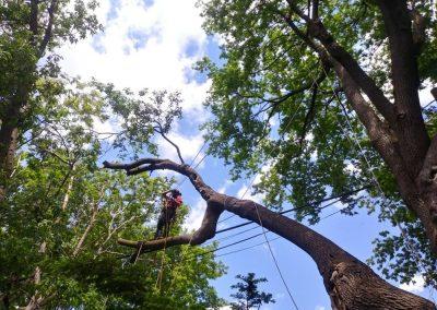 Taille arbre Arbreiz Élagage élageurs et émondeurs sur la rive-sud de montréal - Arbreiz Élagage sur la rive-sud de montréal